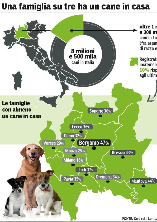 Infografica cane in casa